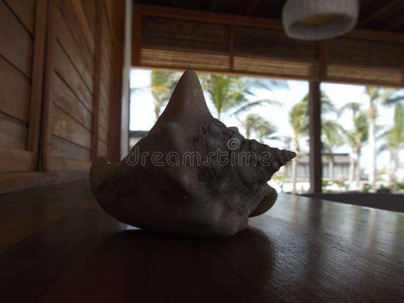 Grote shells op het dok voor het strand royalty-vrije stock fotografie