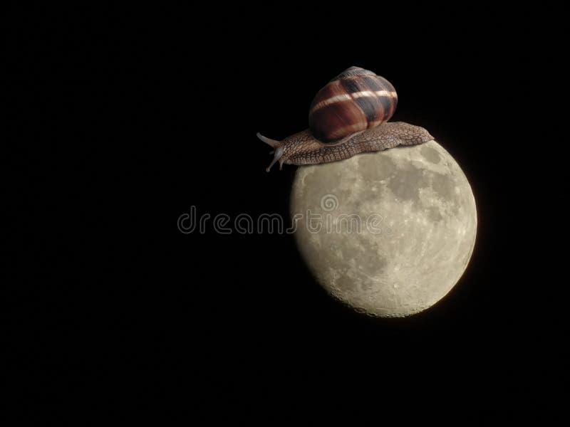 Grote slak die op de maan lopen stock afbeeldingen