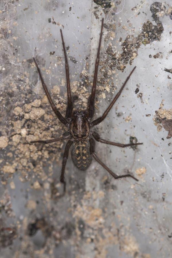 Grote spin in een spinneweb stock afbeeldingen