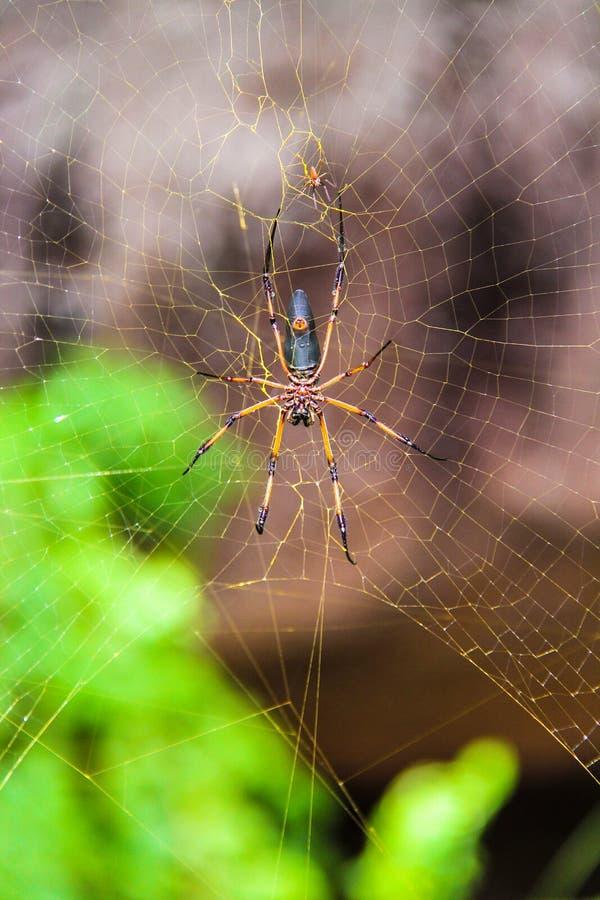 Grote spin op zijn Webclose-up royalty-vrije stock afbeeldingen
