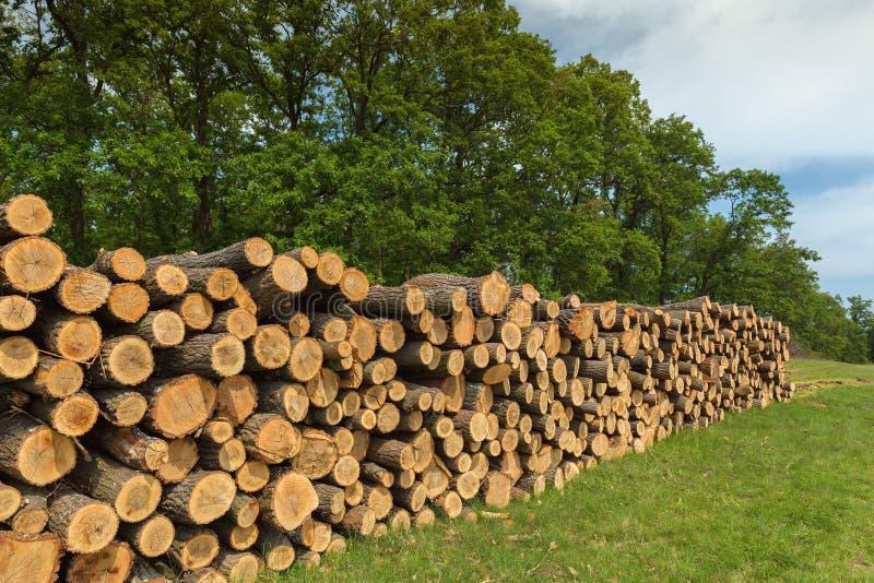 Grote stapel van eiken hout in een bos stock afbeelding