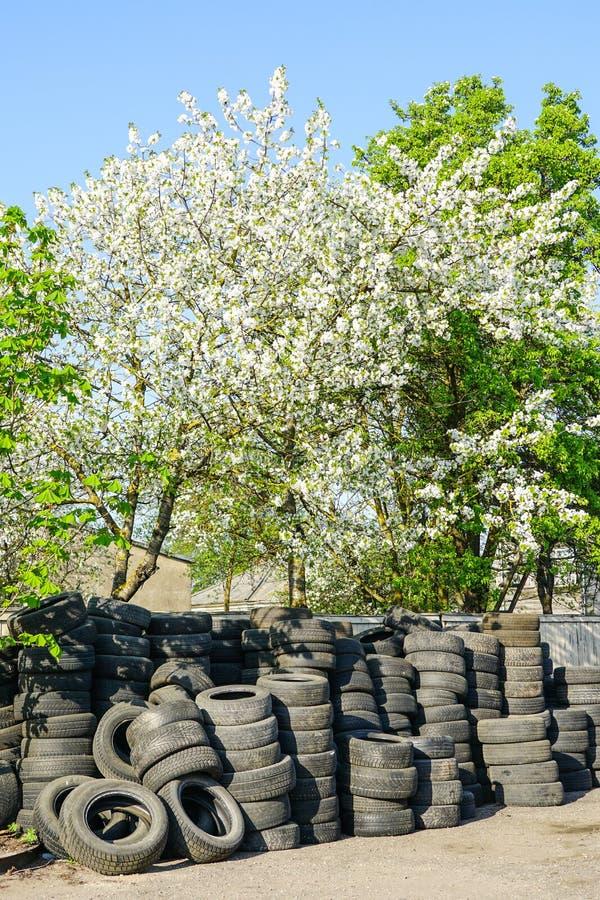 Grote stapel van oude gebruikte rubberautoband op een bloeiende boomachtergrond in de lente stock foto