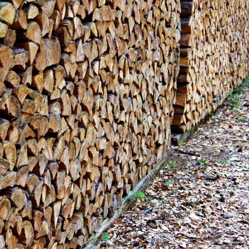 Grote stapels met brandhout die zich in een bos bevinden stock foto