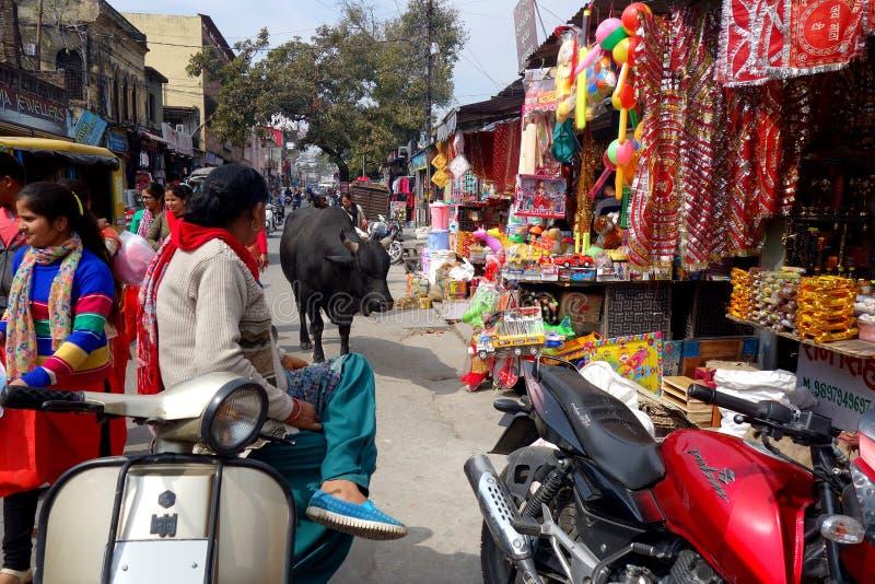 Grote Stier in Rishikesh-Markt royalty-vrije stock foto's