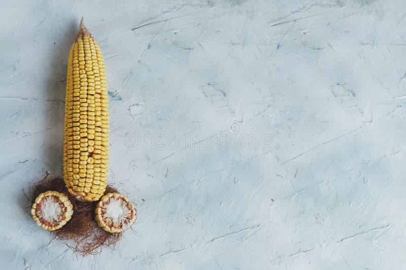 Grote suikermaïs en twee graanbesnoeiingen als symbool van de geslachtsorganen van Mensen stock foto