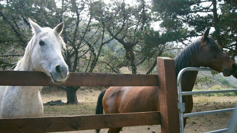 GROTE SUR, CALIFORNIË, VERENIGDE STATEN - OCT 7, 2014: Een paardboerderij in CA, de V.S. die met paarden zich langs omheining Hig royalty-vrije stock foto