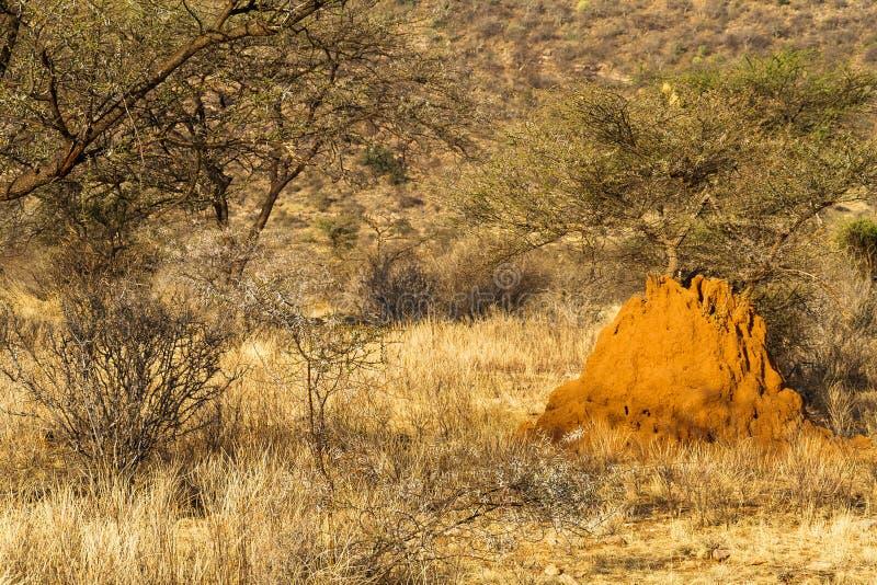 Grote termitary in savanne Samburu Nationaal Park, Kenia royalty-vrije stock afbeeldingen