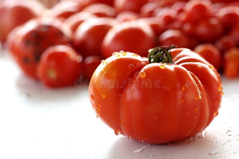 Grote tomaat royalty-vrije stock foto's
