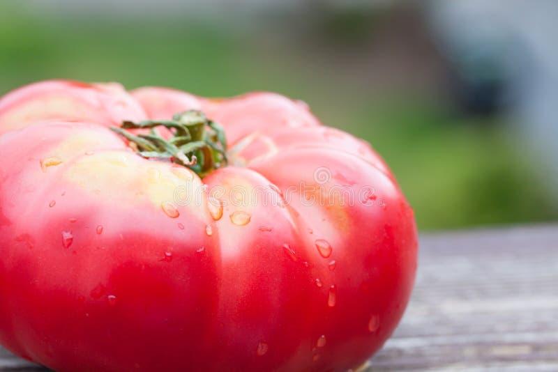 Grote tomaat royalty-vrije stock afbeelding