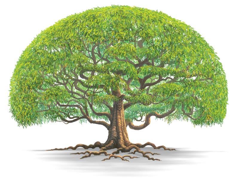 Grote tree03 stock illustratie