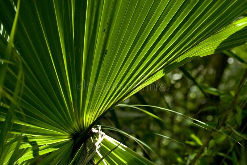 Grote tropische backlit installatie stock fotografie