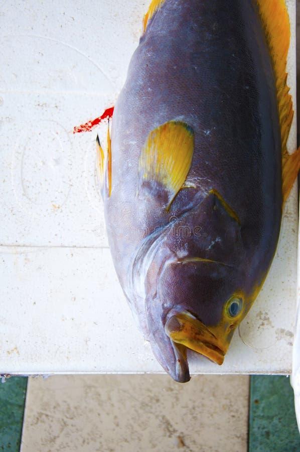 Grote Tuna Fish stock afbeelding