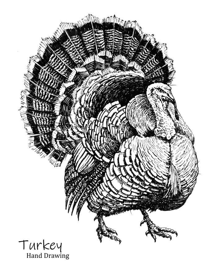 Grote van de de vogel zwarte pen van Turkije de handtekening stock foto