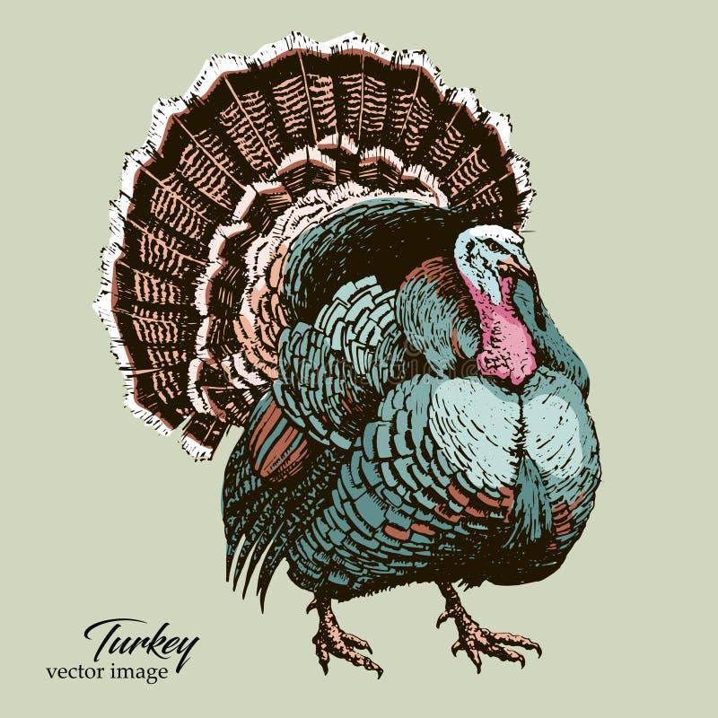 Grote van de de vogel zwarte pen van Turkije vector de handtekening royalty-vrije stock foto's