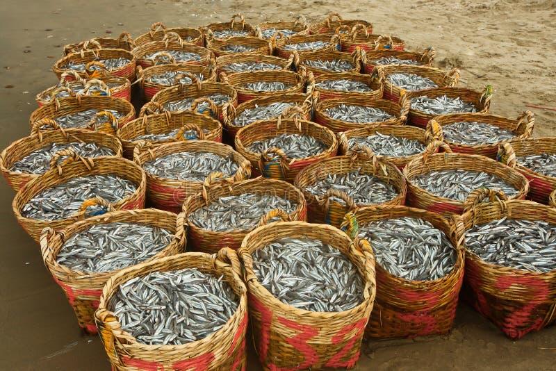 Grote vangst stock foto