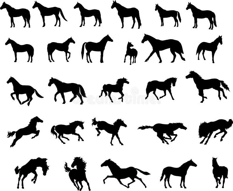 Paarden vector illustratie