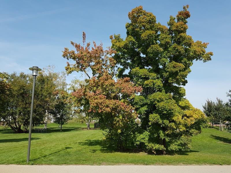 Grote vergankelijke boom met rode, groene en gele bladeren bij een spoor met een lamp stock foto's