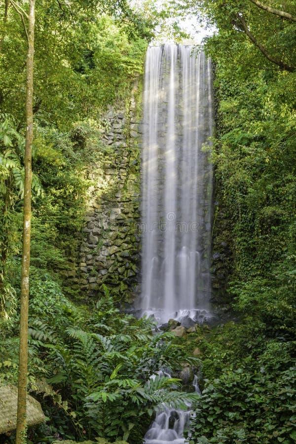 Grote Verticale Waterval in het Regenwoud stock afbeeldingen