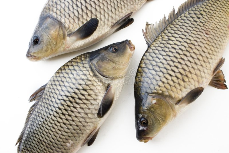 Grote vissen royalty-vrije stock foto's