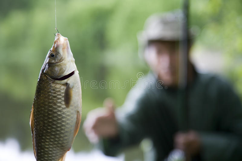 Grote vissen stock foto