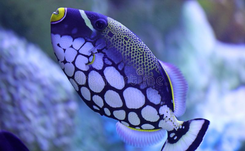 Grote vissen in aquarium bij oceaan, het overzeese schepsel van alt stock foto