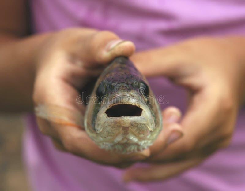 Grote vissen in kind`s handen royalty-vrije stock afbeeldingen