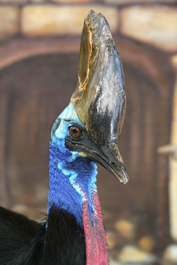 Grote Vogel stock fotografie