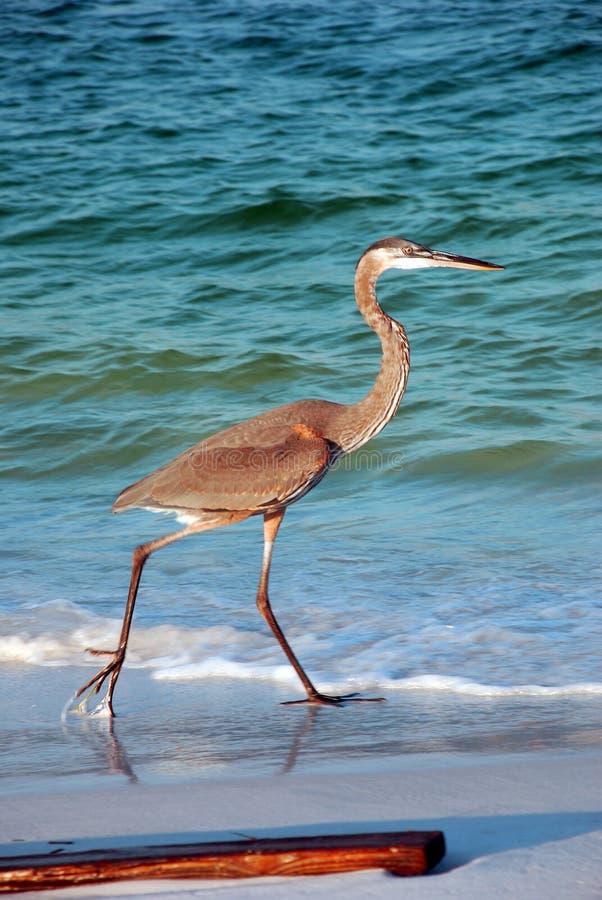 Grote vogel dichtbij water   stock afbeeldingen