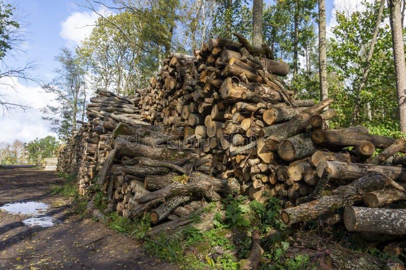 Grote voorraden gekapte boomstammen in bossen stock fotografie