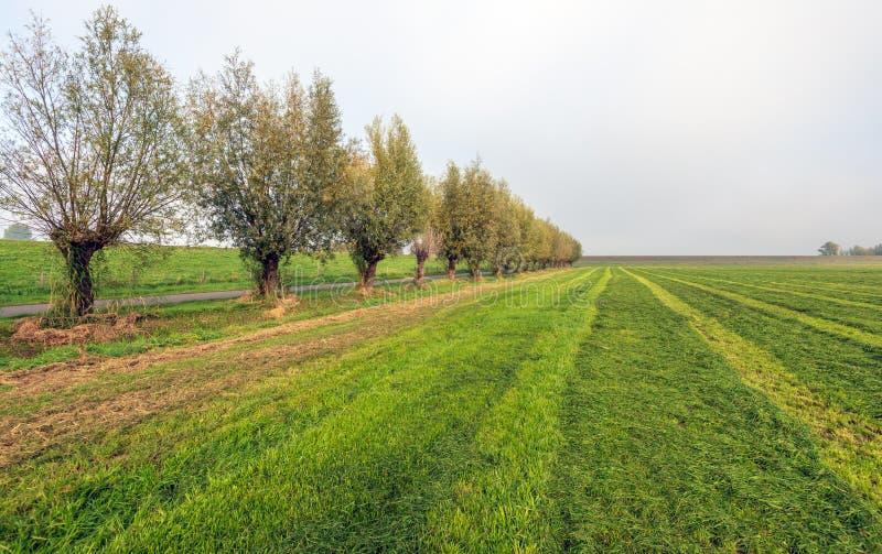 Grote weide met gemaaid gras in verschillende schaduwen van groene volgende royalty-vrije stock afbeeldingen