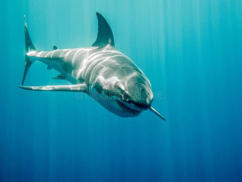 Grote witte haai Bruce van het Vinden van Nemo stock fotografie