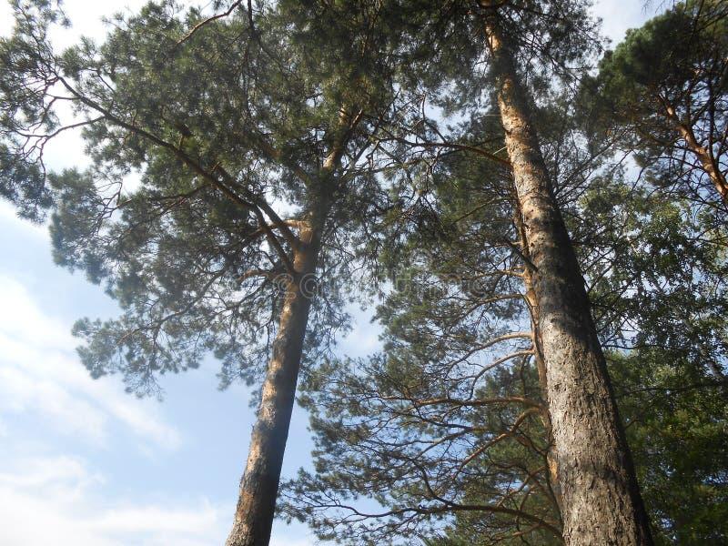 Grote woogs in bos aan de zomer stock fotografie