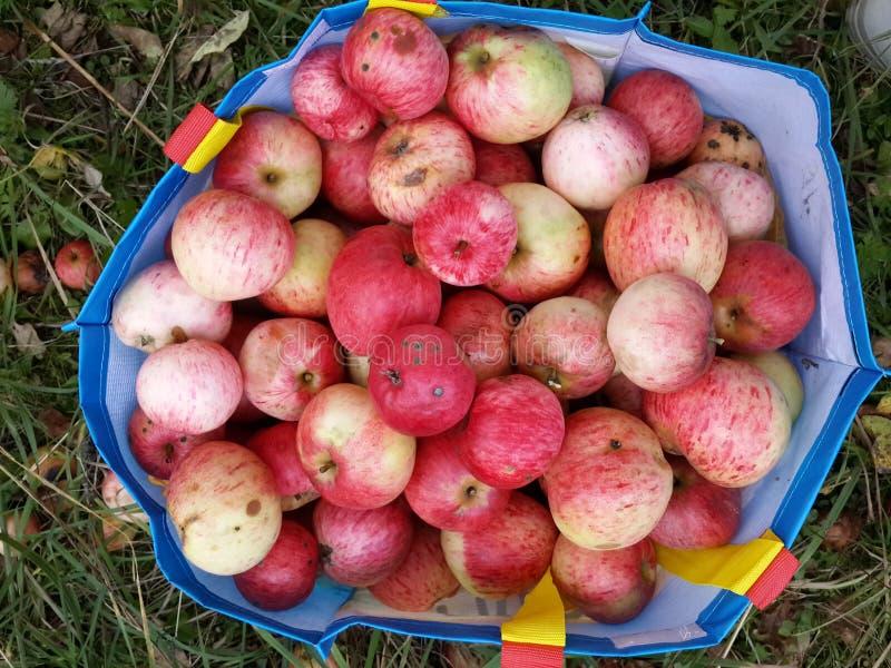 Grote zak met appelen royalty-vrije stock foto