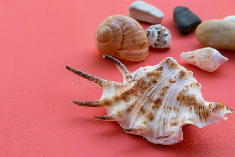 Grote zeeschaal en kleine schelpen van licht en bruine kleur op een koraalachtergrond royalty-vrije stock foto's
