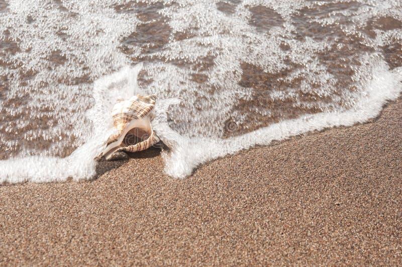 Grote zeeschelp op het zand royalty-vrije stock foto's