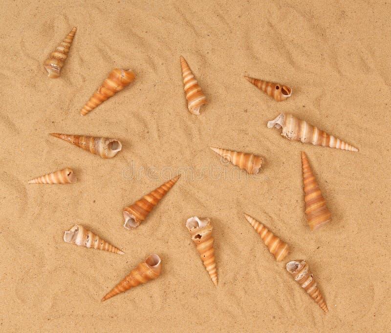 Grote zeeschelpen op het zand stock fotografie