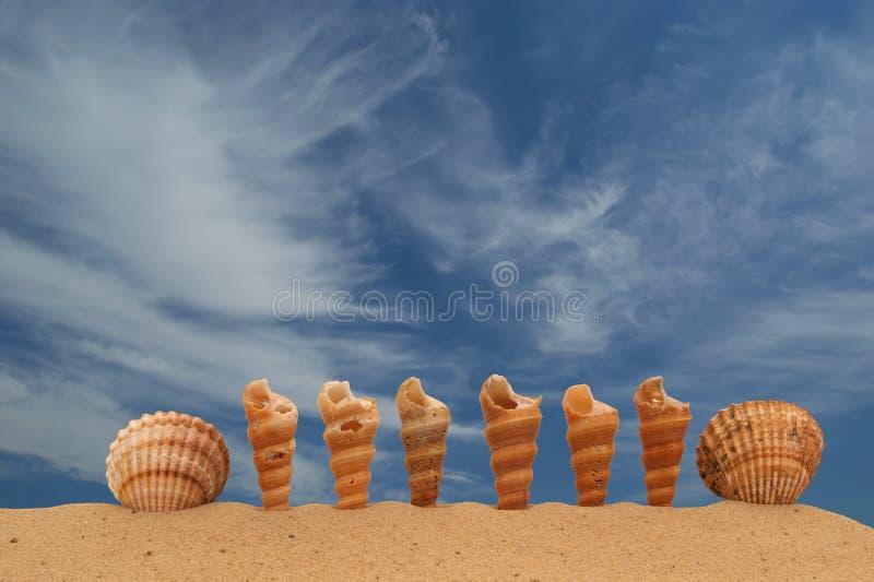 Grote zeeschelpen op het zand stock foto