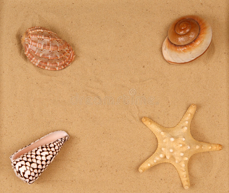 Grote zeeschelpen op het zand stock afbeelding
