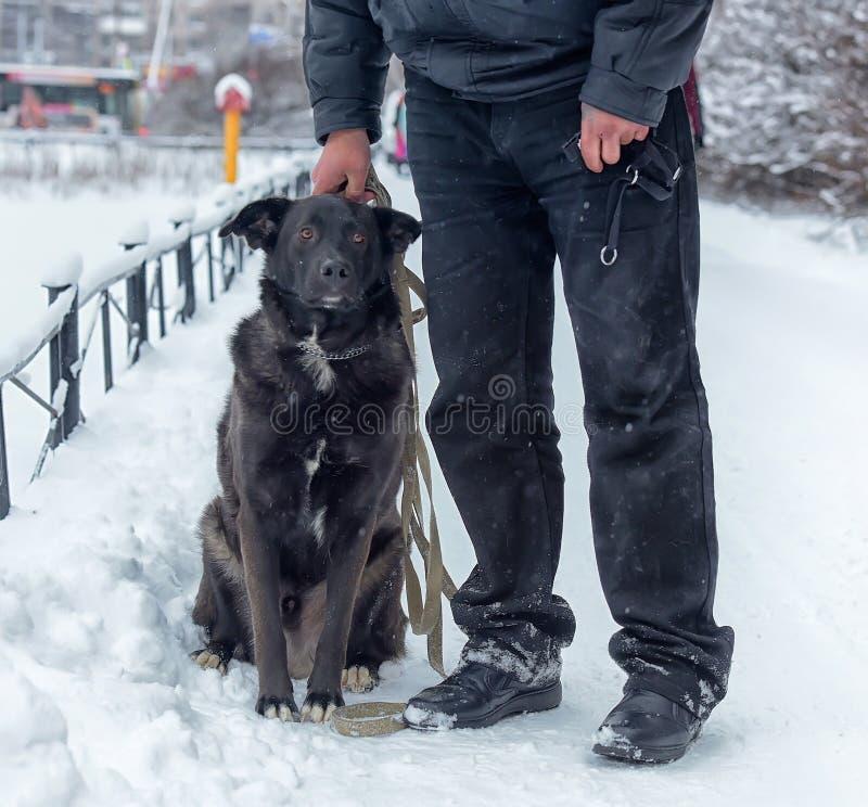 Grote zwarte bastaarde hond royalty-vrije stock fotografie