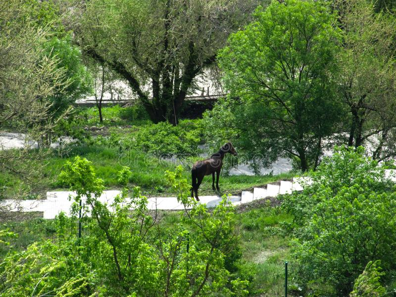 Grote zwarte die paardtribunes alleen onder de bomen met vers groen gebladerte worden behandeld royalty-vrije stock foto