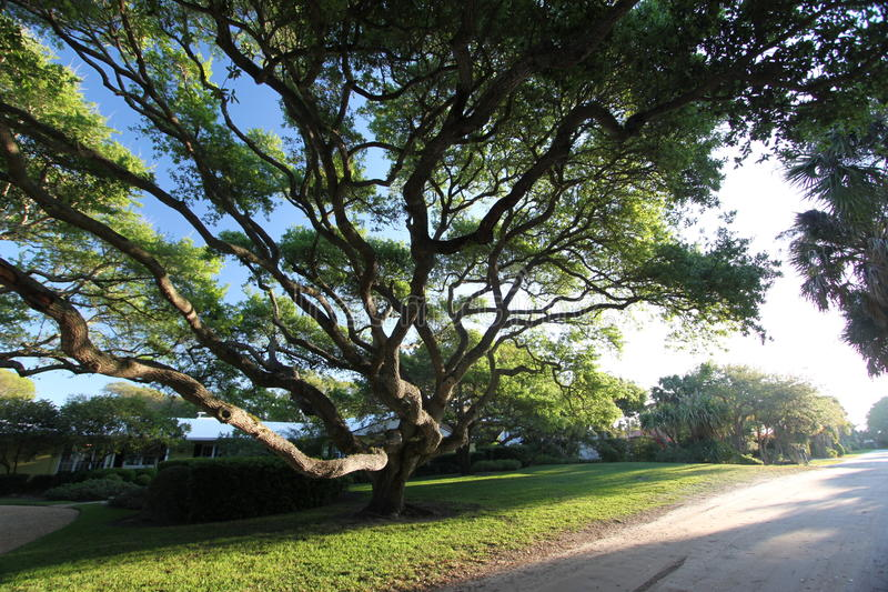 Grotesker Baum stockfoto