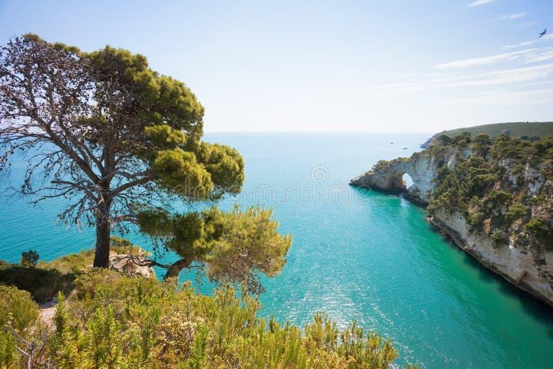 Grotta della Campana Piccola, Apulia - ensamt träd på coasna arkivfoto