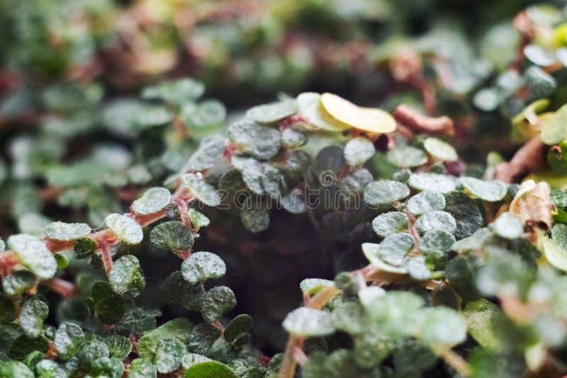 Grotta i djungeln fotografering för bildbyråer