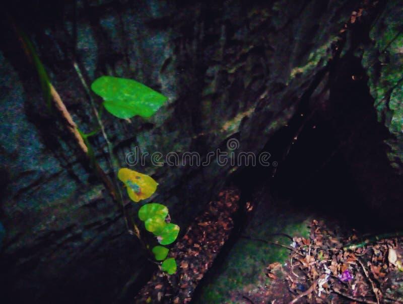 Grottan rotar fotografering för bildbyråer