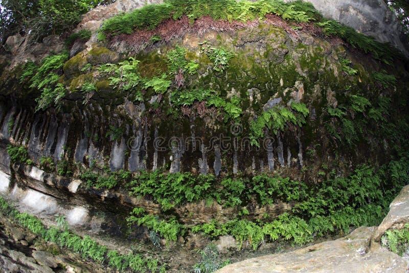 Grotte de fougère et de mousse le long de crique de Taureau photos libres de droits