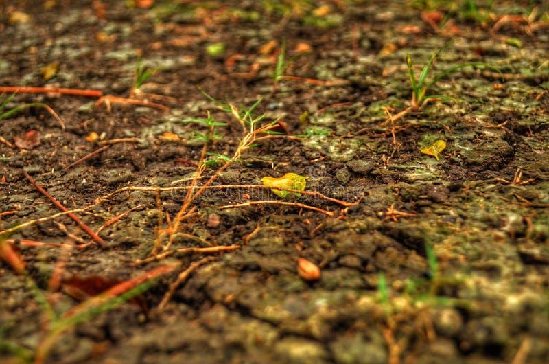 ground photos libres de droits