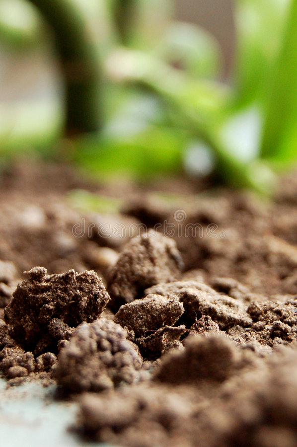 Download Ground and bamboo stock photo. Image of dust, lumps, brown - 2663706