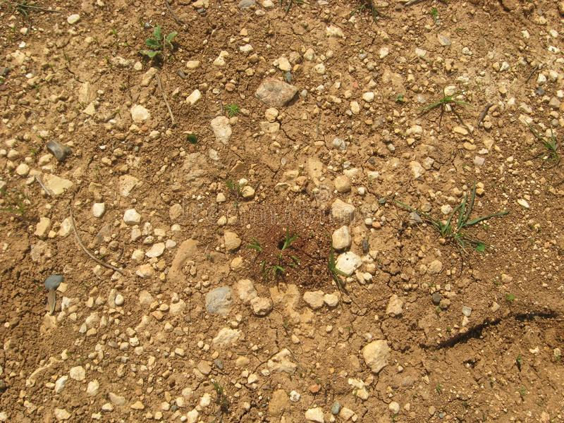 Ground Bee Burrow on Light Brown Soil with Green Plant Sapling Details in Natural Environment. stock photo