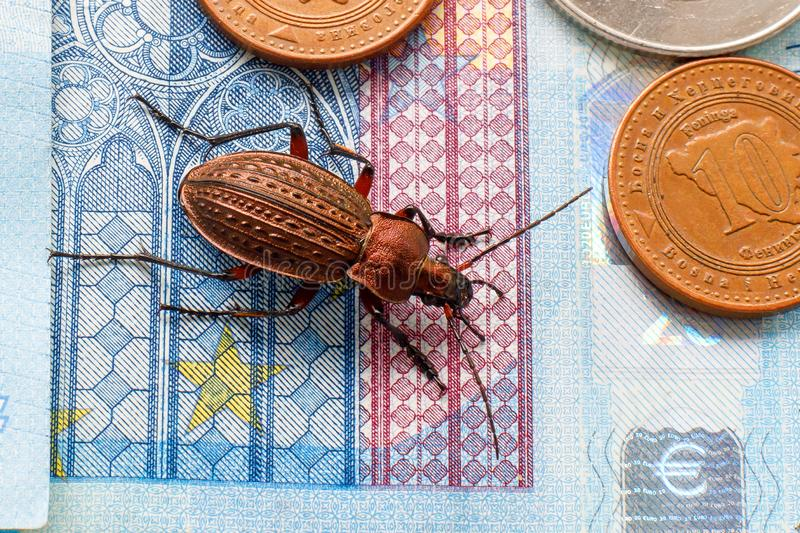 Ground beetle on the bill twenty euros, small coins of Europe stock image