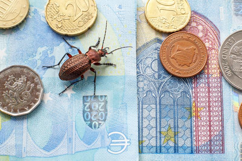 Ground beetle on the bill twenty euros, small coins of Europe stock photo